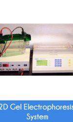 2d-gel-electrophoresis-system1